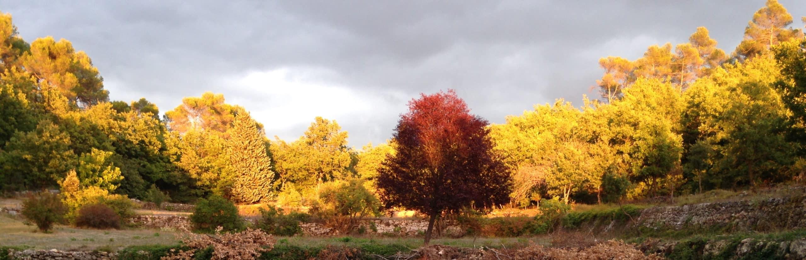 Lumière du soir en Provence