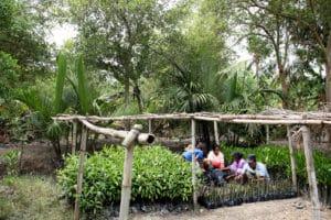 Groupe de malgaches dans serre de tapia